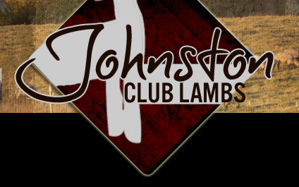 Johnston Club Lambs
